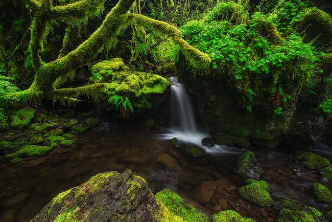Izvori, potoci i rijeke - Page 6 Utajeny-lesni-pramen-62